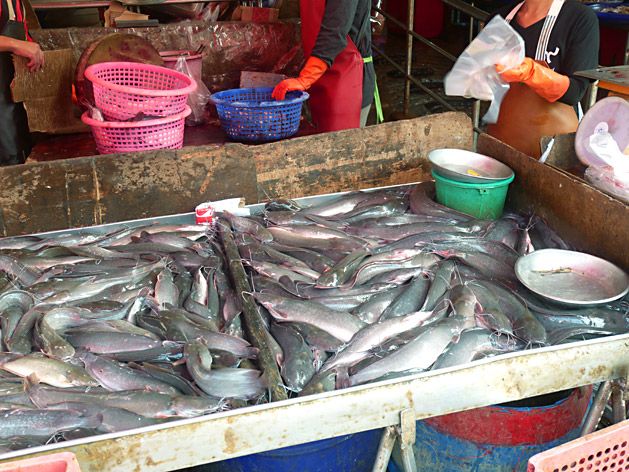 クロントゥーイ市場のナマズ