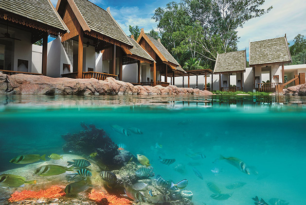 Swim Reef